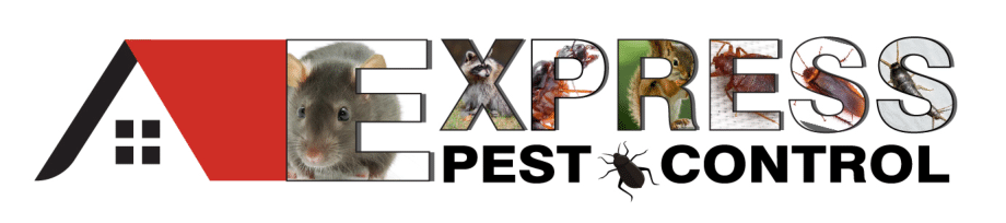 Express Pest Control Services in Vancouver, Richmond, Surrey