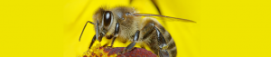 Bee HORNET Wasp Control Service