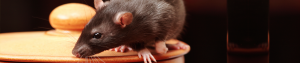 rat-internal-banner