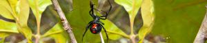 spider-internal-banner