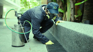 Best Pest Control Service in Vancouver Mice Infestation, Rat Removal, Wildlife Removal, Cockroach Control, Bee Wasp Removal, Flea Control, Tick Control, Humane Birds Removal, Bed Bug Control, Drain Fly Infestation, Moth Control, Squirrel Removal, Spider Control, Raccoon Removal, Port Moody, Langley, Surrey, Vancouver BC